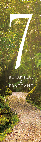 BOTANICAL & FRAGRANT